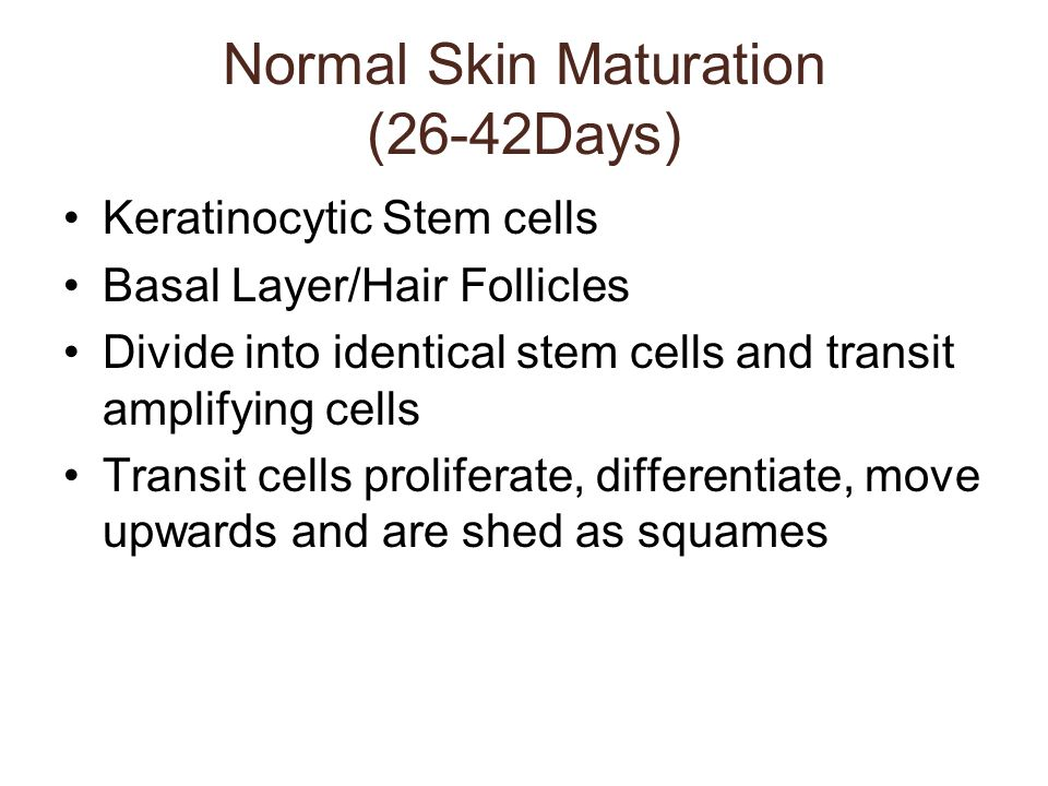 Normal Skin Maturation (26-42Days) Keratinocytic Stem cells Basal Layer/Hair Follicles Divide into identical stem cells and transit amplifying cells T
