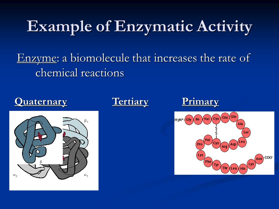 Example of Enzymatic Activity TertiaryQuaternaryPrimary Enzyme: a biomolecule that increases the rate of chemical reactions