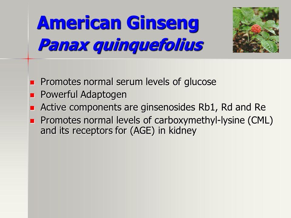 American Ginseng Panax quinquefolius Promotes normal serum levels of glucose Promotes normal serum levels of glucose Powerful Adaptogen Powerful Adapt