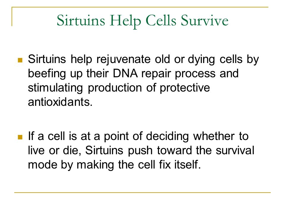 Sirtuins Help Cells Survive Sirtuins help rejuvenate old or dying cells by beefing up their DNA repair process and stimulating production of protective antioxidants.