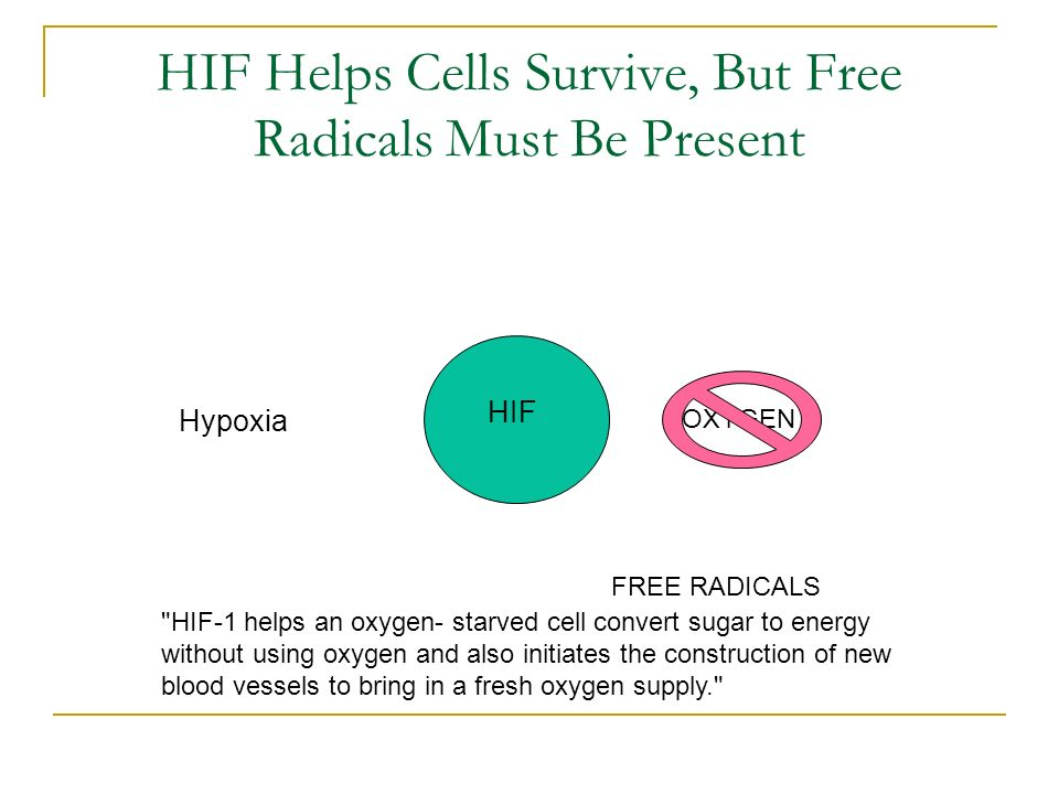 HIF Helps Cells Survive, But Free Radicals Must Be Present OXYGEN Hypoxia HIF FREE RADICALS HIF-1 helps an oxygen- starved cell convert sugar to energy without using oxygen and also initiates the construction of new blood vessels to bring in a fresh oxygen supply.