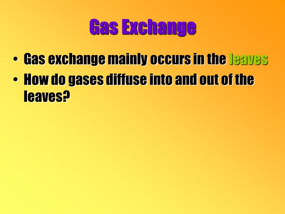 Gas Exchange Gas exchange mainly occurs in the leavesGas exchange mainly occurs in the leaves How do gases diffuse into and out of the leaves How do gases diffuse into and out of the leaves