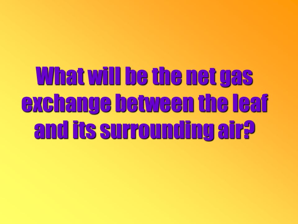 What will be the net gas exchange between the leaf and its surrounding air