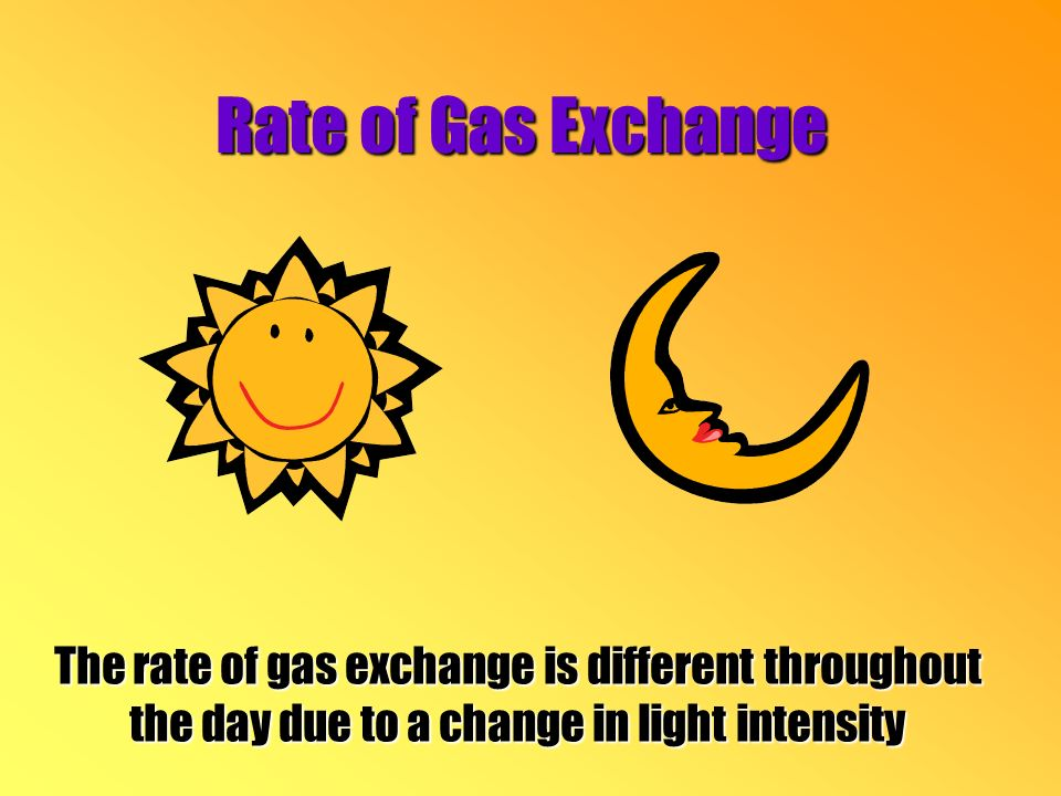 Rate of Gas Exchange The rate of gas exchange is different throughout the day due to a change in light intensity