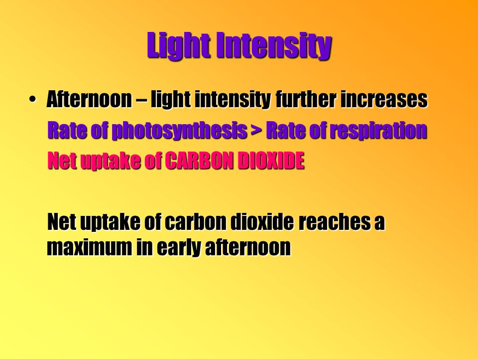 Afternoon – light intensity further increasesAfternoon – light intensity further increases Rate of photosynthesis > Rate of respiration Rate of photosynthesis > Rate of respiration Net uptake of CARBON DIOXIDE Net uptake of CARBON DIOXIDE Net uptake of carbon dioxide reaches a maximum in early afternoon Net uptake of carbon dioxide reaches a maximum in early afternoon