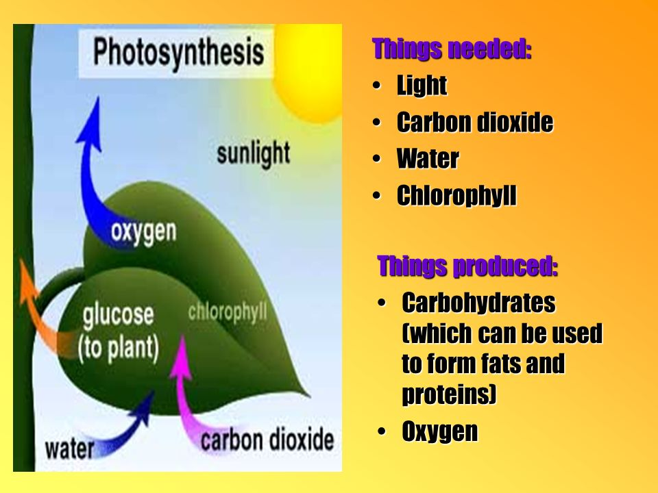 Things needed: LightLight Carbon dioxideCarbon dioxide WaterWater ChlorophyllChlorophyll Things produced: Carbohydrates (which can be used to form fats and proteins)Carbohydrates (which can be used to form fats and proteins) OxygenOxygen