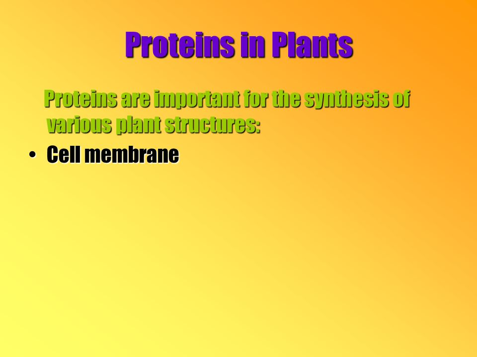 Proteins in Plants Proteins are important for the synthesis of various plant structures: Proteins are important for the synthesis of various plant structures: Cell membraneCell membrane