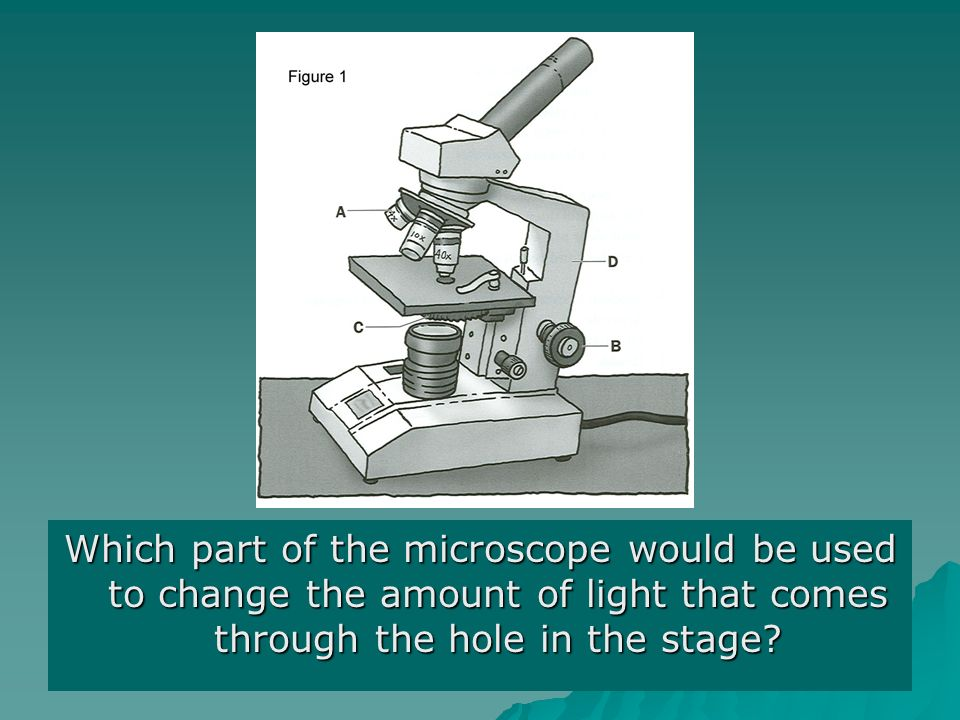 Which part of the microscope would be used to change the amount of light that comes through the hole in the stage?
