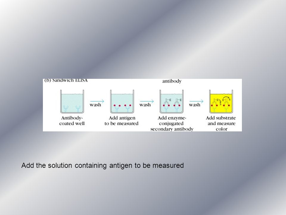 Add the solution containing antigen to be measured