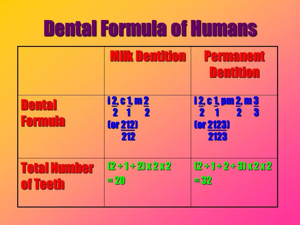 Milk Dentition Permanent Dentition Dental Formula i 2, c 1, m 2 2 1 2 2 1 2 (or 212) 212 212 i 2, c 1, pm 2, m 3 2 1 2 3 2 1 2 3 (or 2123) 2123 2123 T