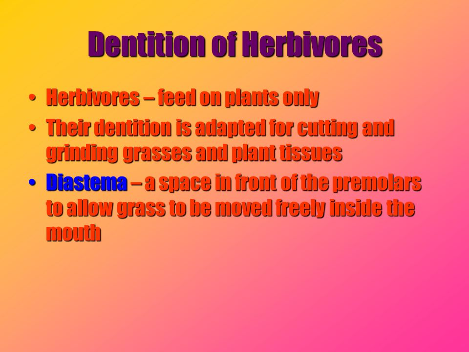 Dentition of Herbivores Herbivores – feed on plants onlyHerbivores – feed on plants only Their dentition is adapted for cutting and grinding grasses a