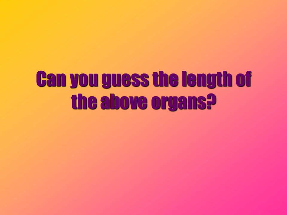 Can you guess the length of the above organs?
