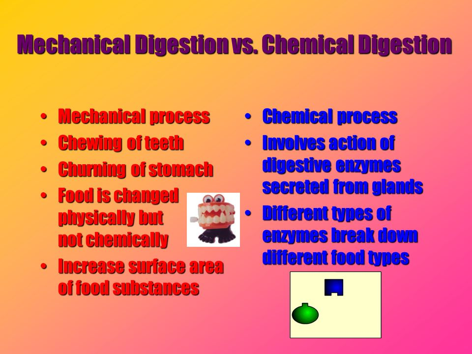 Mechanical Digestion vs. Chemical Digestion Mechanical processMechanical process Chewing of teethChewing of teeth Churning of stomachChurning of stoma