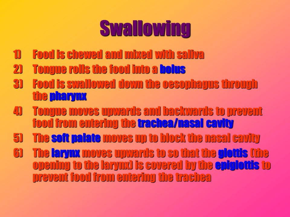 Swallowing 1)Food is chewed and mixed with saliva 2)Tongue rolls the food into a bolus 3)Food is swallowed down the oesophagus through the pharynx 4)T