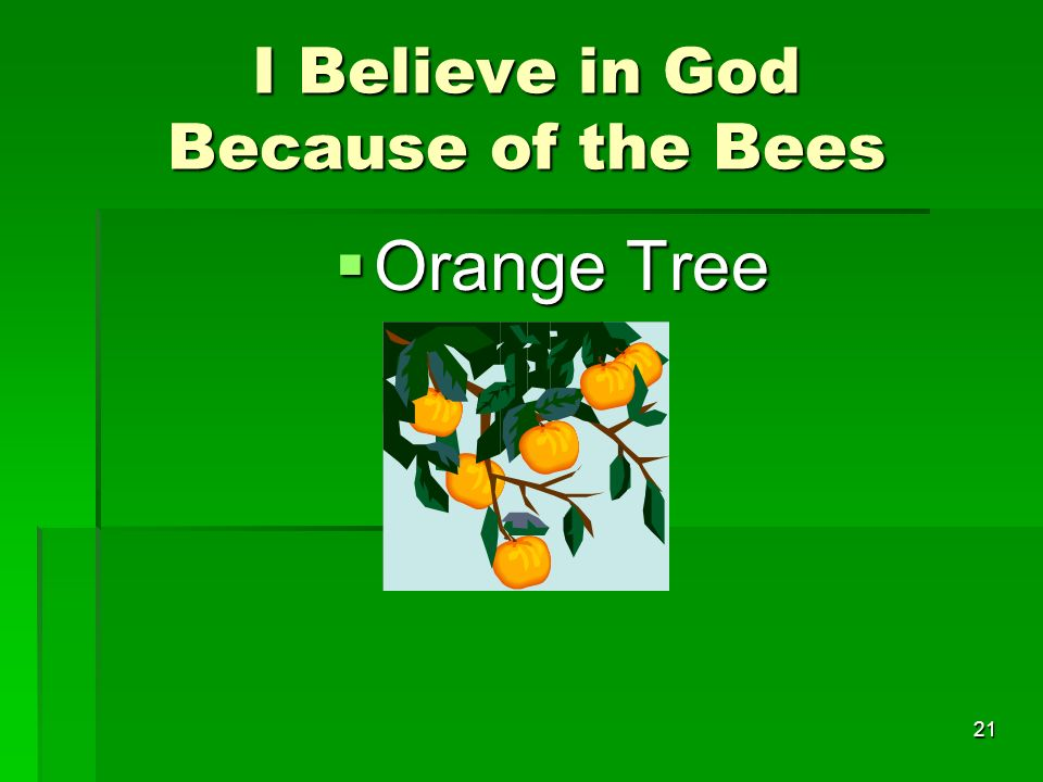 I Believe in God Because of the Bees I Believe in God Because of the Bees Orange Tree Orange Tree 21
