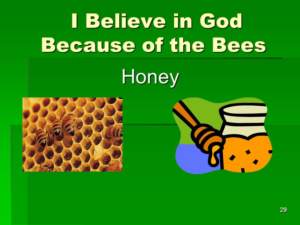 I Believe in God Because of the Bees I Believe in God Because of the Bees Honey 29
