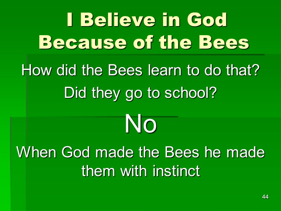 I Believe in God Because of the Bees I Believe in God Because of the Bees How did the Bees learn to do that.