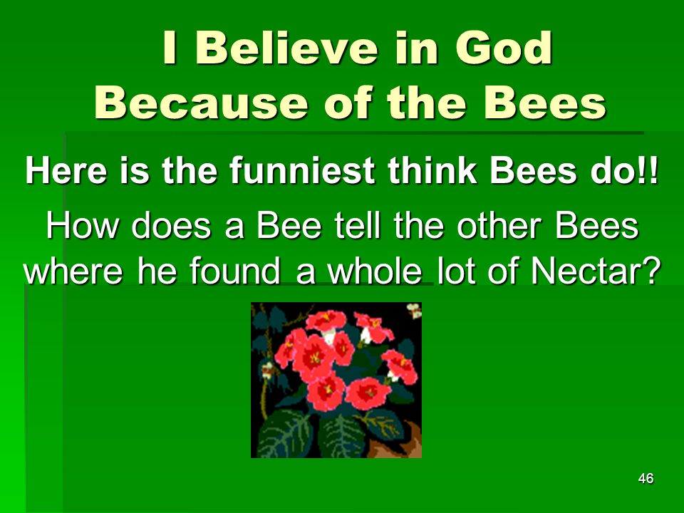 I Believe in God Because of the Bees I Believe in God Because of the Bees Here is the funniest think Bees do!.
