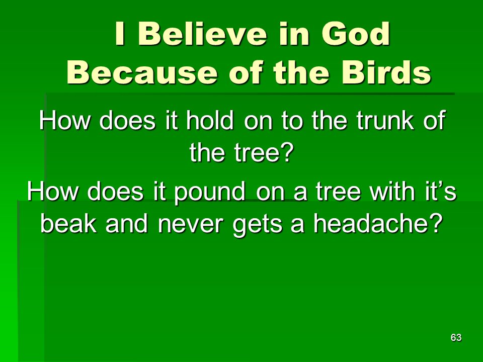 I Believe in God Because of the Birds I Believe in God Because of the Birds How does it hold on to the trunk of the tree.