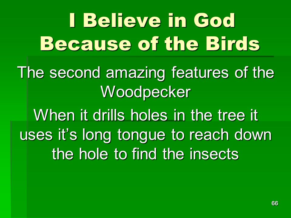 I Believe in God Because of the Birds I Believe in God Because of the Birds The second amazing features of the Woodpecker When it drills holes in the tree it uses its long tongue to reach down the hole to find the insects 66