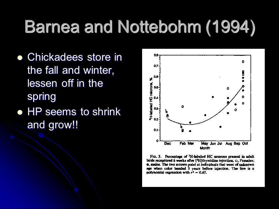Barnea and Nottebohm (1994) Chickadees store in the fall and winter, lessen off in the spring Chickadees store in the fall and winter, lessen off in t