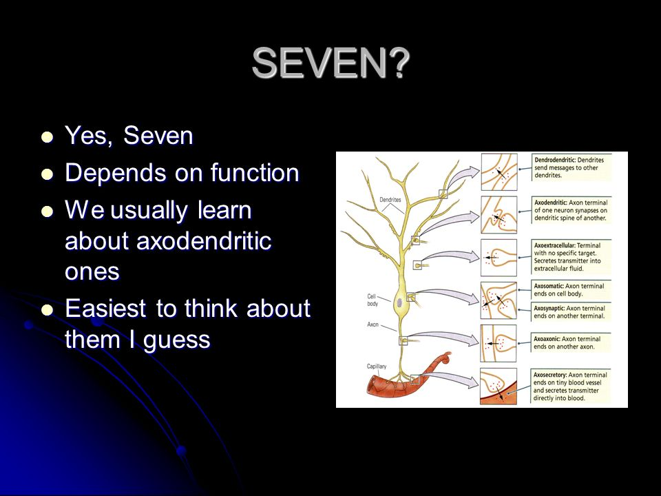 SEVEN? Yes, Seven Yes, Seven Depends on function Depends on function We usually learn about axodendritic ones We usually learn about axodendritic ones