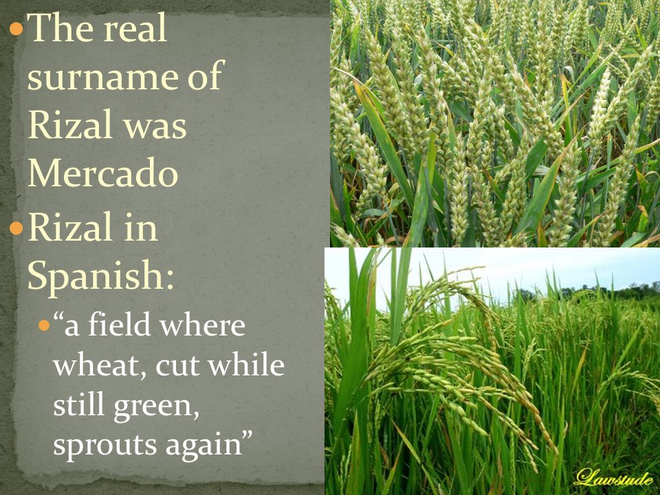 The real surname of Rizal was Mercado Rizal in Spanish: a field where wheat, cut while still green, sprouts again