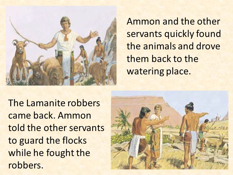 Ammon and the other servants quickly found the animals and drove them back to the watering place. The Lamanite robbers came back. Ammon told the other