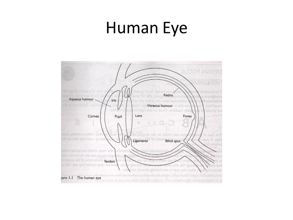 Image Formation Cornea and lens – Focuses light into a sharp image on retina – An upside down image is formed on the retina.