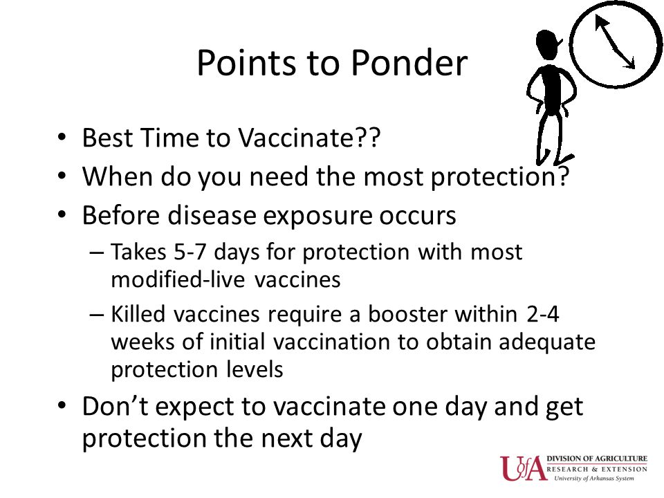 Points to Ponder Best Time to Vaccinate?.When do you need the most protection.