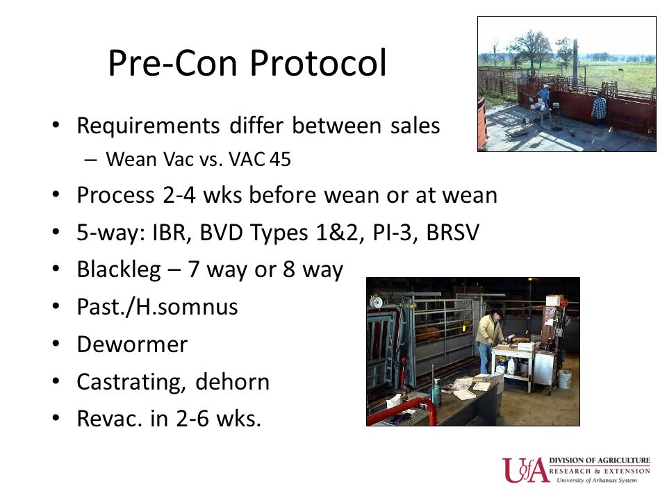Pre-Con Protocol Requirements differ between sales – Wean Vac vs. VAC 45 Process 2-4 wks before wean or at wean 5-way: IBR, BVD Types 1&2, PI-3, BRSV