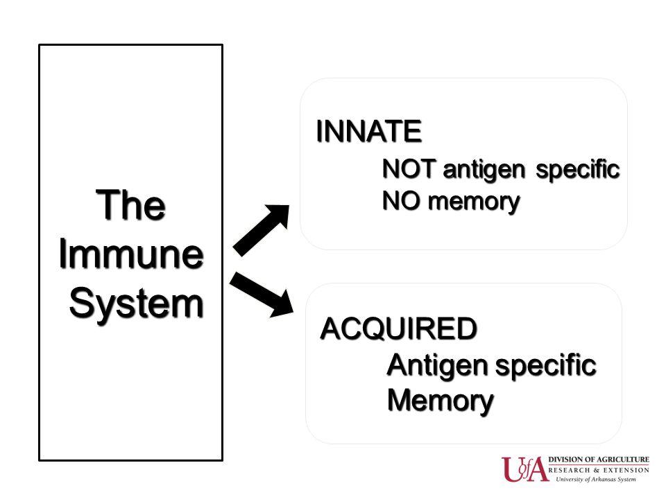 TheImmune System System INNATE NOT antigen specific NO memory ACQUIRED Antigen specific Memory
