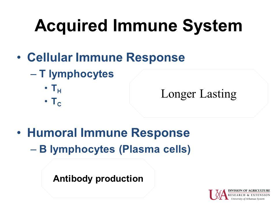 Acquired Immune System Cellular Immune Response –T lymphocytes T H T C Humoral Immune Response –B lymphocytes (Plasma cells) Longer Lasting Antibody p