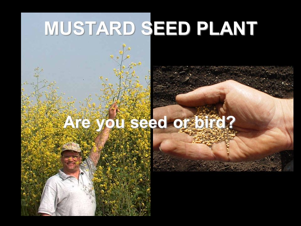 Are you seed or bird?