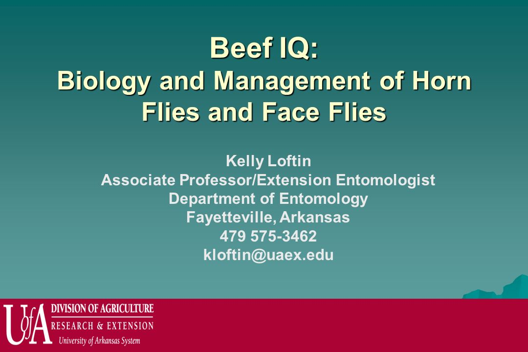 Beef IQ: Biology and Management of Horn Flies and Face Flies Kelly Loftin Associate Professor/Extension Entomologist Department of Entomology Fayettev