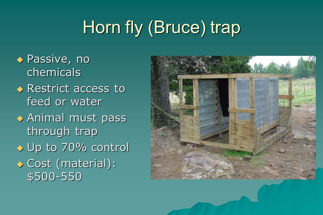 Horn fly (Bruce) trap Passive, no chemicals Passive, no chemicals Restrict access to feed or water Restrict access to feed or water Animal must pass t