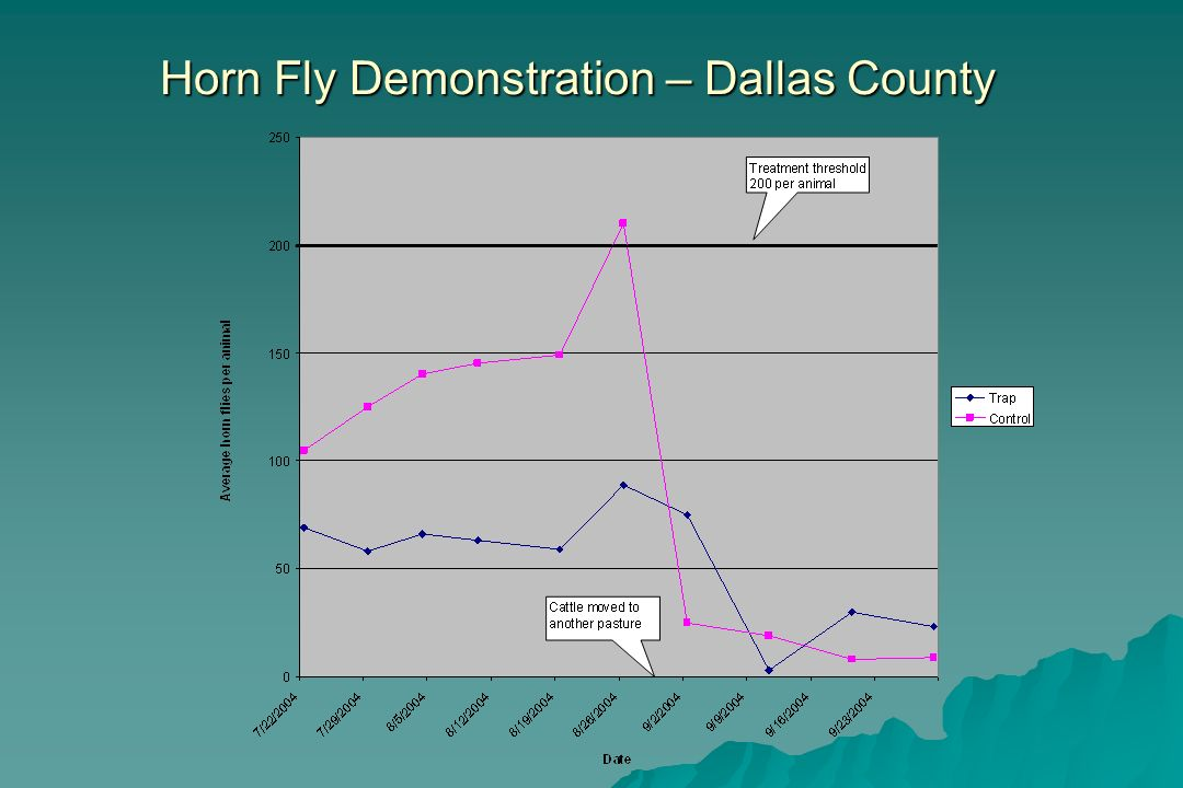 Horn Fly Demonstration – Dallas County