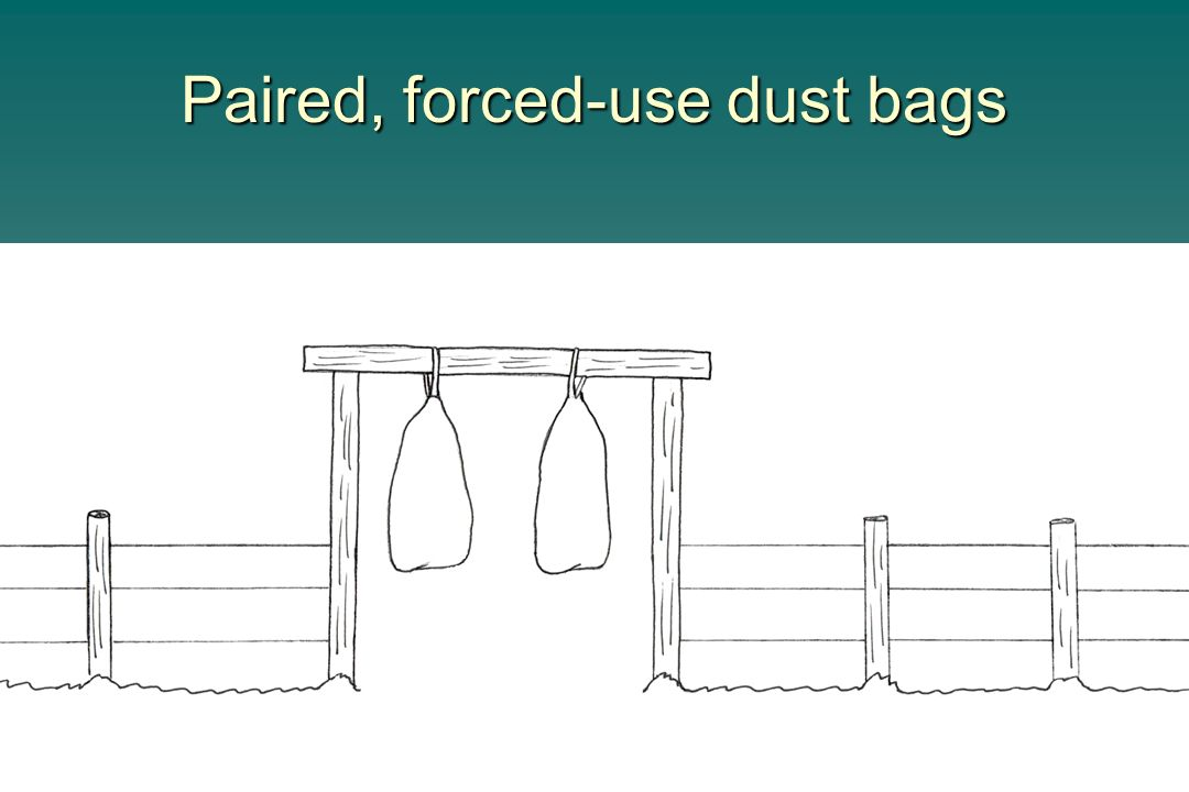 Paired, forced-use dust bags