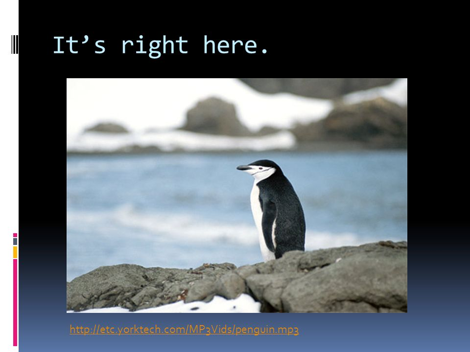 http://etc.yorktech.com/MP3Vids/penguin.mp3 Its right here.