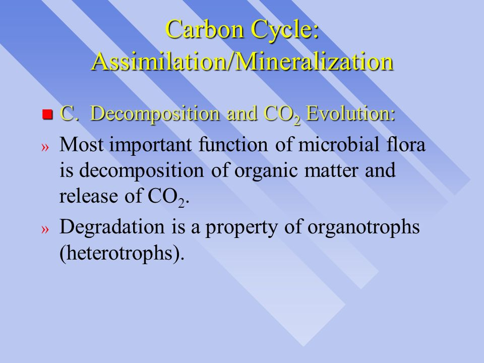 Carbon Cycle: Assimilation/Mineralization n C. Decomposition and CO 2 Evolution: » Most important function of microbial flora is decomposition of orga