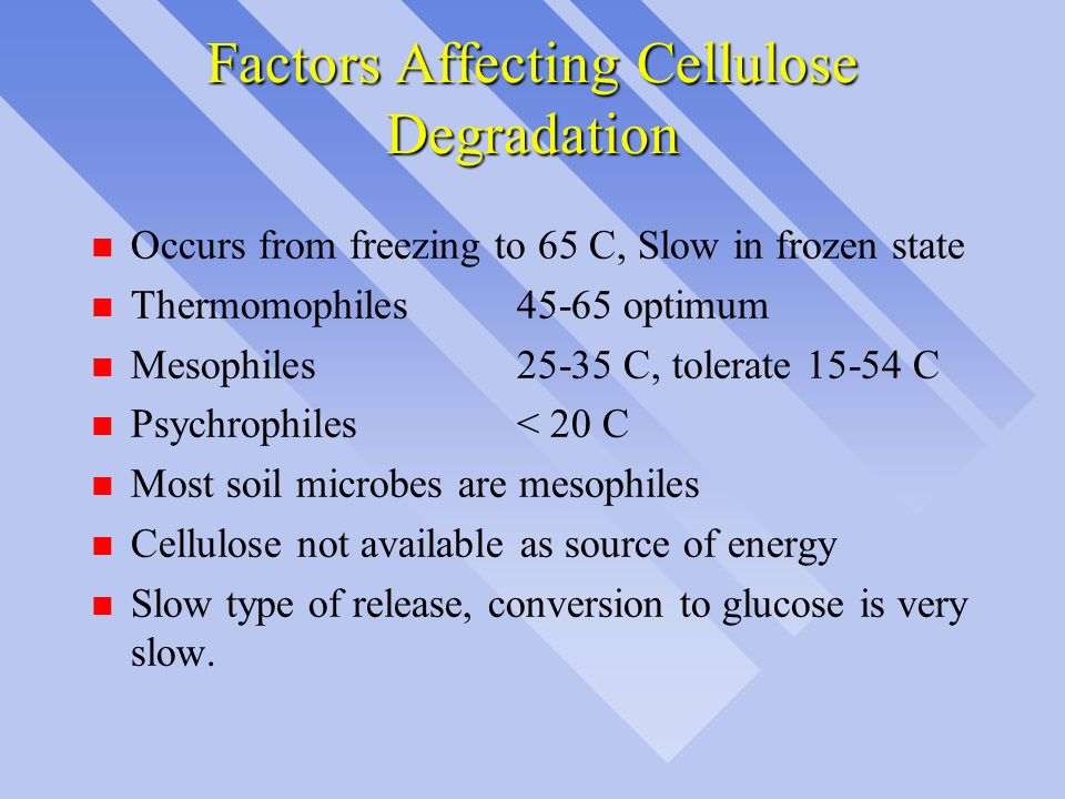Factors Affecting Cellulose Degradation n Occurs from freezing to 65 C, Slow in frozen state n Thermomophiles 45-65optimum n Mesophiles25-35 C, tolera