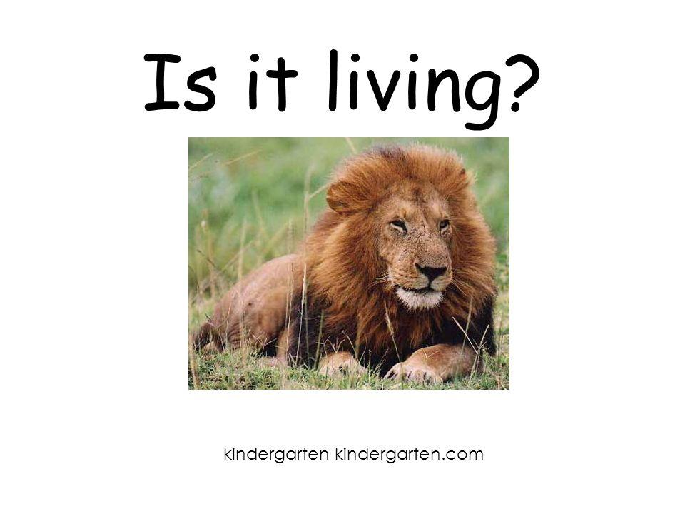 Is it living kindergarten kindergarten.com