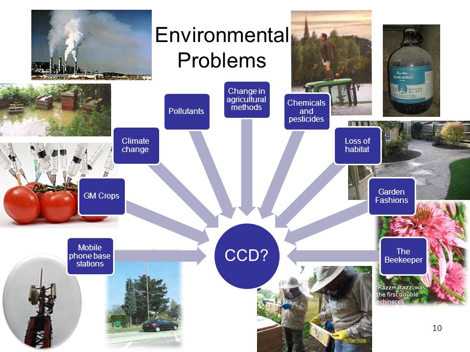 Environmental Problems 10 CCD.