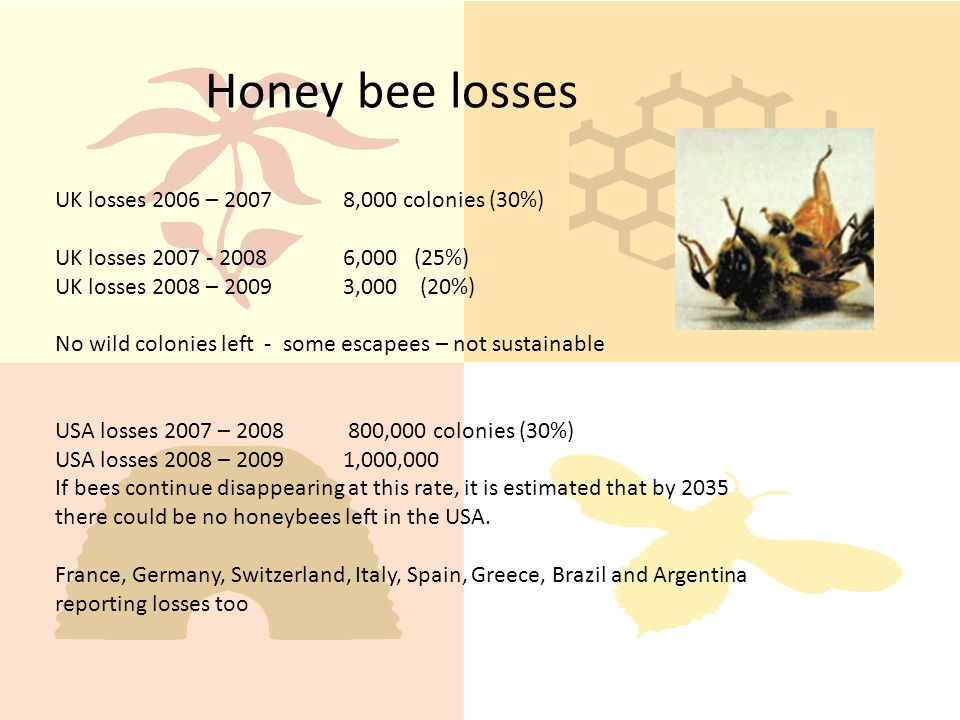 UK losses 2006 – 20078,000 colonies (30%) UK losses 2007 - 20086,000 (25%) UK losses 2008 – 20093,000 (20%) No wild colonies left - some escapees – not sustainable USA losses 2007 – 2008 800,000 colonies (30%) USA losses 2008 – 20091,000,000 If bees continue disappearing at this rate, it is estimated that by 2035 there could be no honeybees left in the USA.