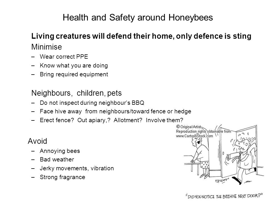 Health and Safety around Honeybees Living creatures will defend their home, only defence is sting Minimise –Wear correct PPE –Know what you are doing –Bring required equipment Neighbours, children, pets –Do not inspect during neighbours BBQ –Face hive away from neighbours/toward fence or hedge –Erect fence.