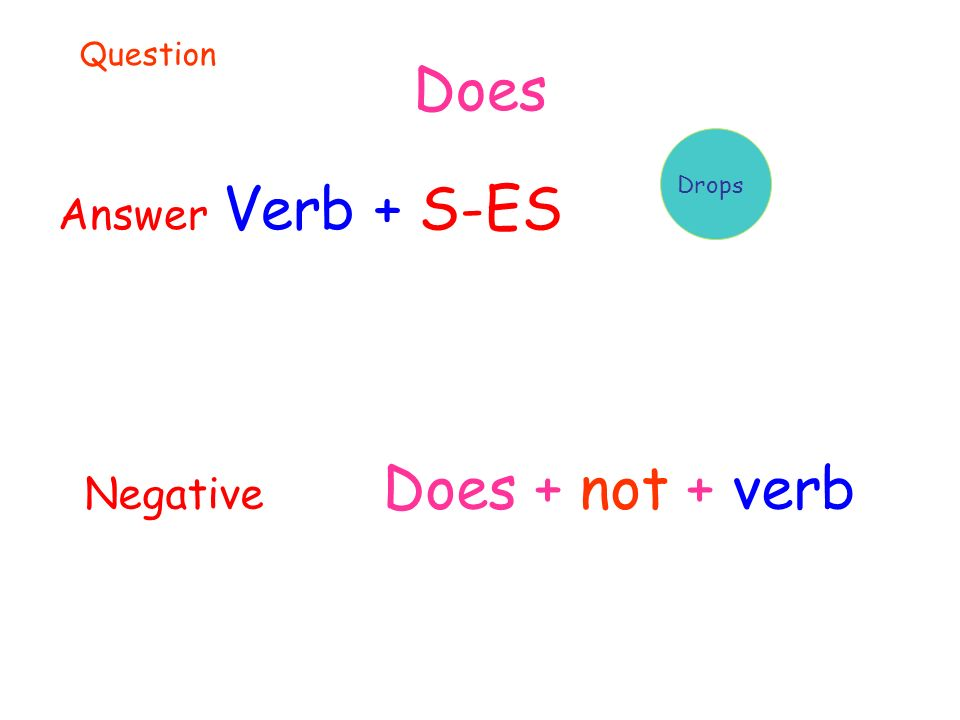 Does Answer Verb + S-ES Drops Question Negative Does + not + verb