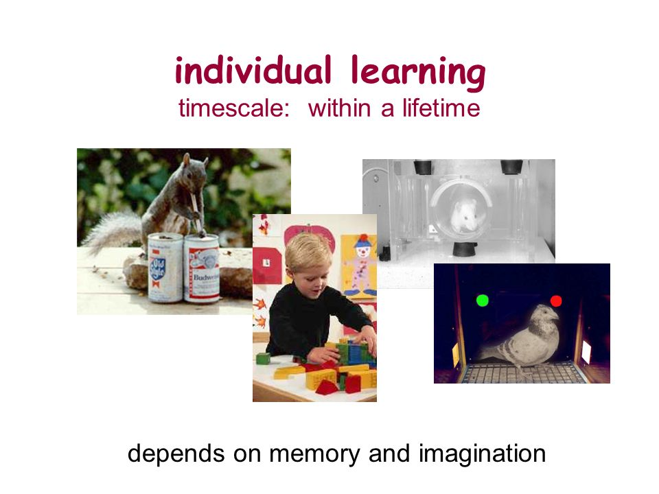 individual learning timescale: within a lifetime depends on memory and imagination