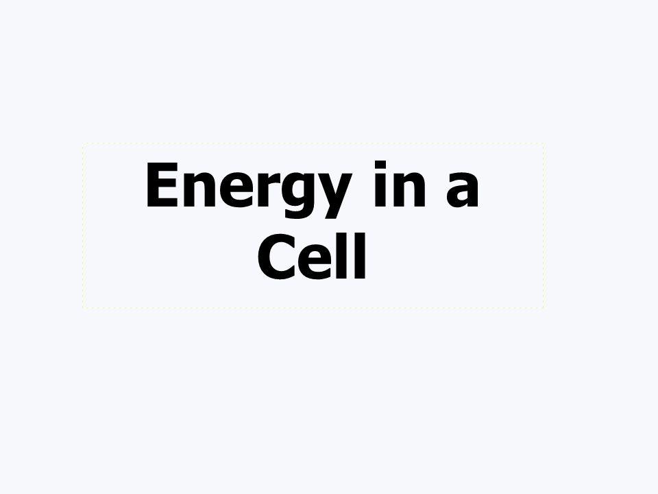 Total ATP Production 36 -38 ATP molecules C 6 H 12 O 6 + 6 O 2 6 CO 2 + 6 H 2 O + 36-38 ATP enzymes