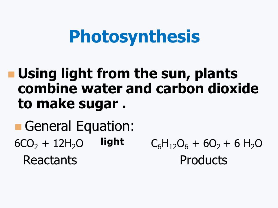 Photosynthesis Autotrophs make their own food by trapping light energy and converting it to chemical energy (carbohydrates).