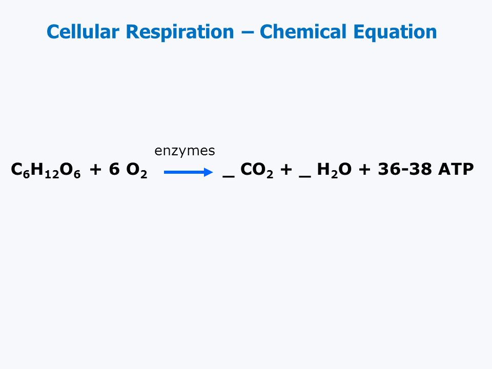 Cellular Respiration The process of breaking down food molecules to release energy. Aerobic respiration occurs in the mitochondria. Two types: Aerobic